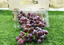 Candy Snap Red Seedless Grapes